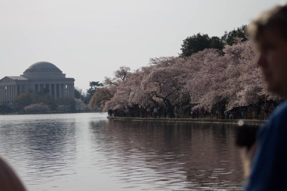 2014-04-13_Cherry_Blossons_and_Evening_Downtown-20140413-IMG_8708.jpg