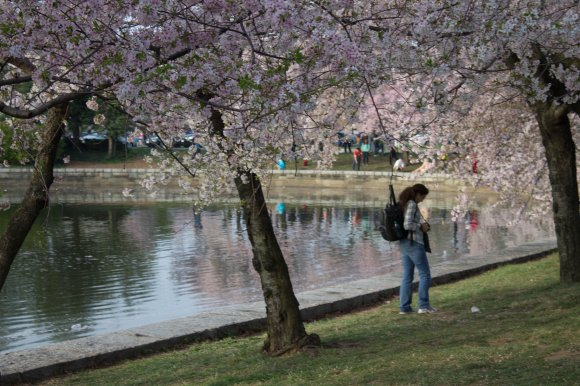 2014-04-13_Cherry_Blossons_and_Evening_Downtown-20140413-IMG_8593.jpg
