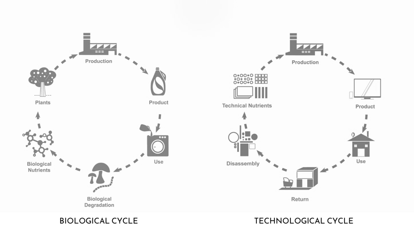 biological and technological cycle.png