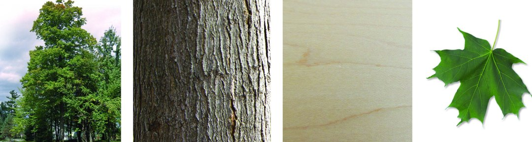 arbres-produits-scieriedionetfils-erablesucre.jpg