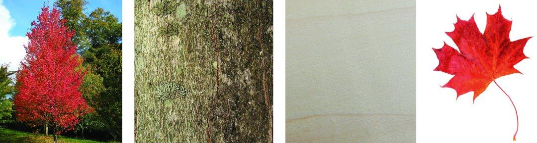 arbres-produits-scieriedionetfils-erablerouge2.jpg