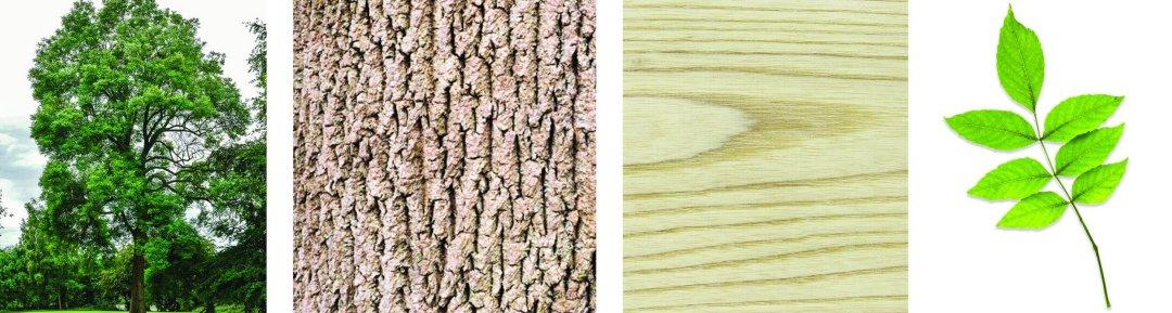 arbres-produits-scieriedionetfils-frene.jpg