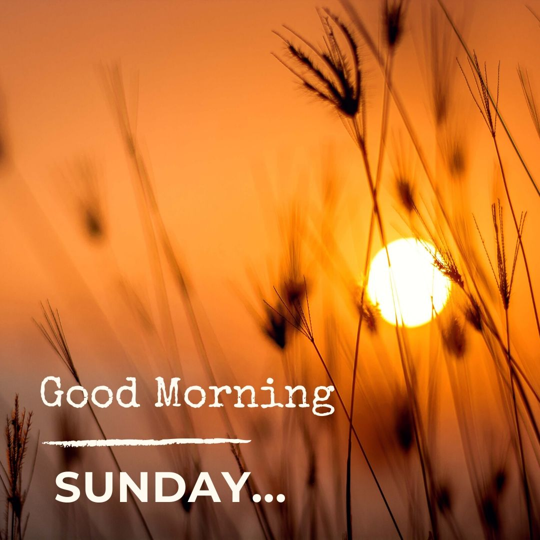 Good Morning Sunday Image Hd full HD free download.