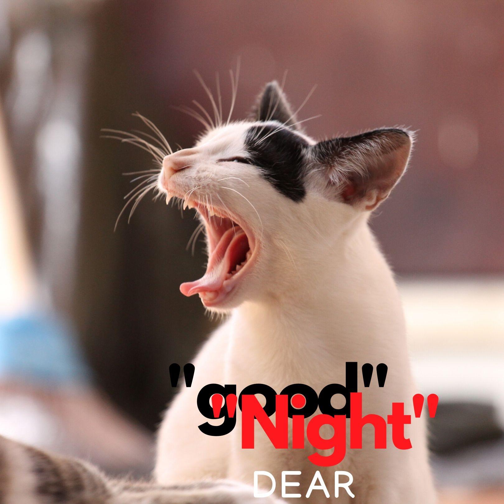 Good Night Dear Sleepy cat image full HD free download.
