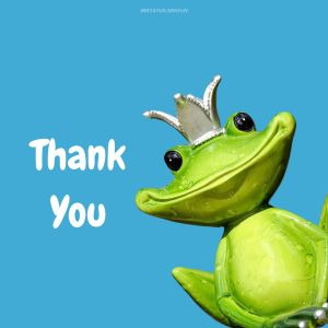 Thank You Funny Images frog full HD free download.