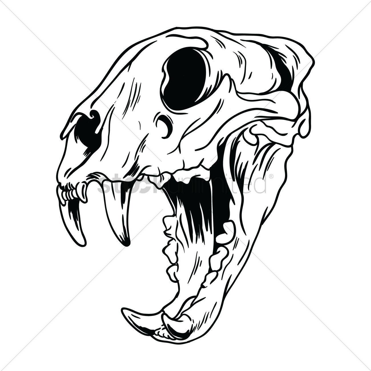Tiger Skull Drawing