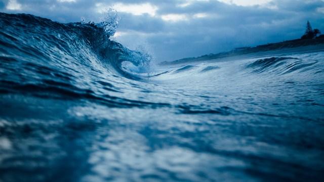 Marine Life Oceans