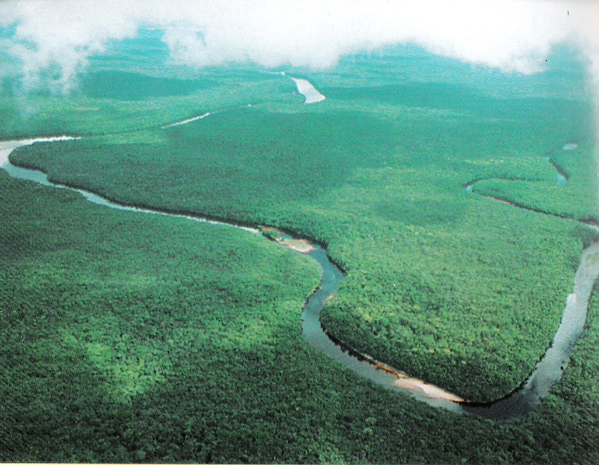 Orinoco Delta Swamp Forests   One Earth