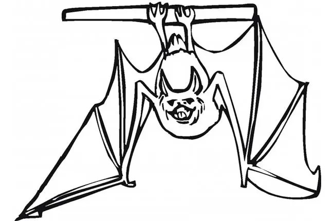 Bat Template Animal Templates Free Amp Premium Templates