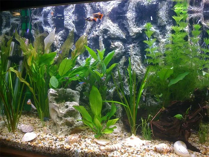 graphic relating to Printable Fish Tank Backgrounds referred to as Printable Aquarium Record Paper