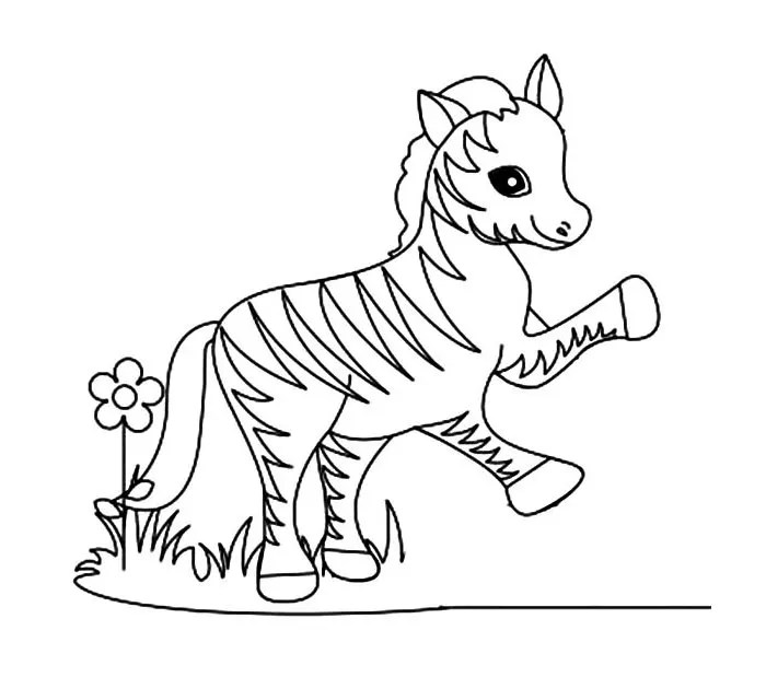 baby zebra coloring page images amp pictures becuo
