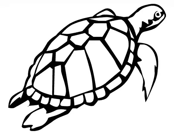 20 turtle templates crafts amp colouring pages free amp premium