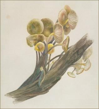 Beatrix-Potter-Mycology