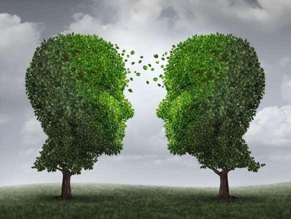 """Résultat de recherche d'images pour """"Plants Talk to Each Other Using an Internet of Fungus"""""""
