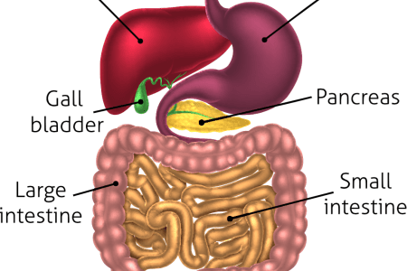 Awesome Interior Of Small Intestine