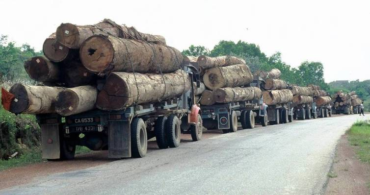 A queue of logging trucks in Southeast Asia