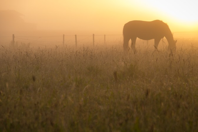 Scientists – and horse owners – often wonder exactly how horses were domesticated. Photo: nfomastern/Flickr, CC BY-SA
