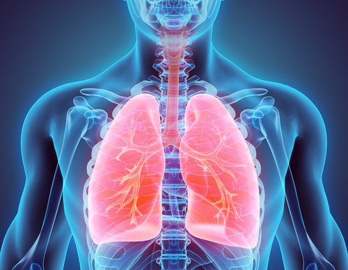Image result for Your left lung is about 10 percent smaller than your right one.
