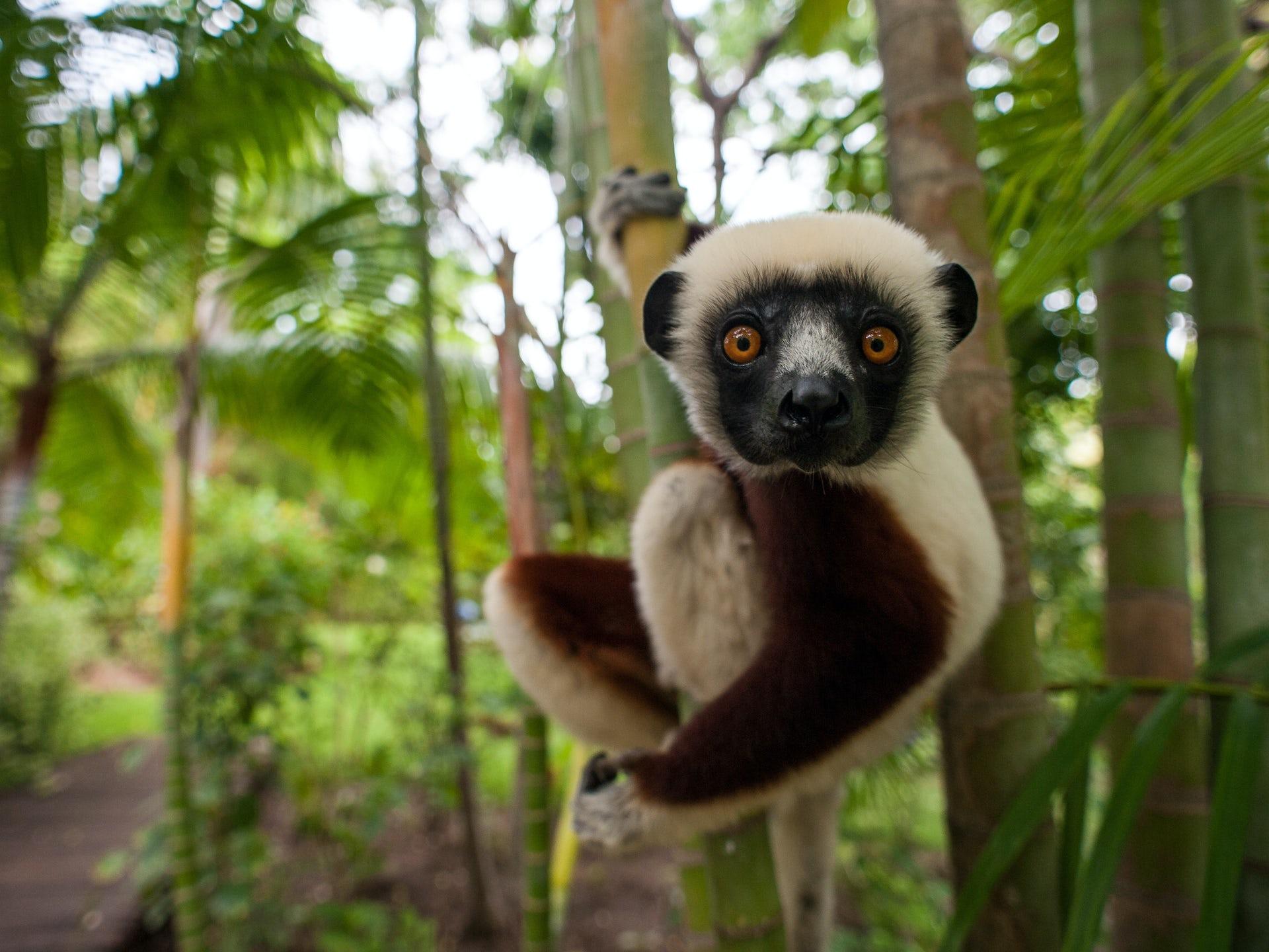 Nature S Comeback No The Coronavirus Pandemic Threatens The World S Wildlife