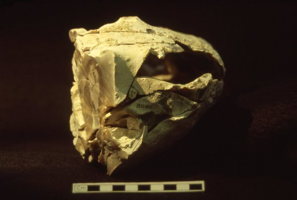 Knapping scatter from Boxgrove. Photo: UCL Institute of Archaeology, Author provided