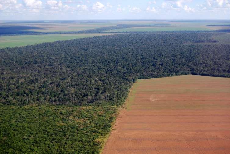 Pembukaan hutan untuk agrikultu.