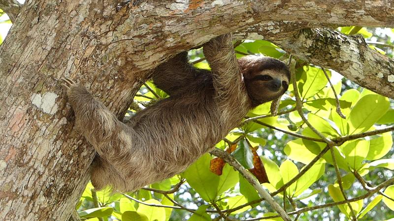 Slock on tree branch.