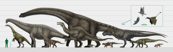 Diagram of dinosaur sizes compared with a human