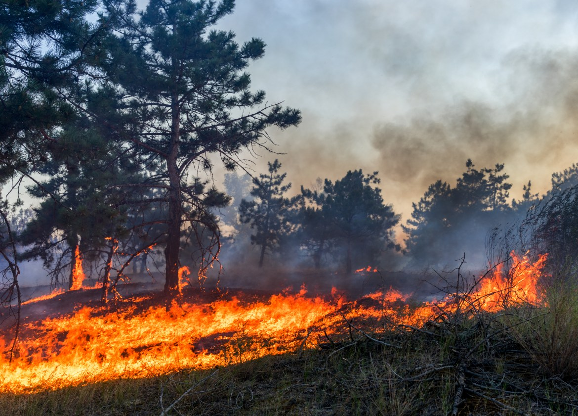 Fire burns the understory of a boreal woodland.