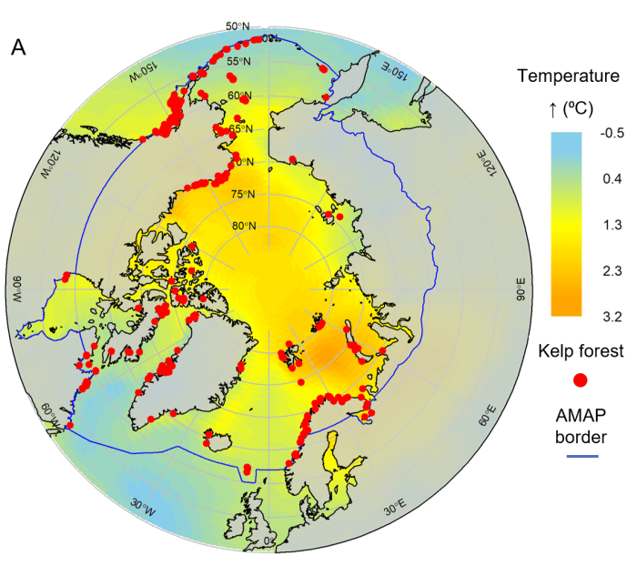 A map of the Arctic Circle showing how kelp forests will expand further north as the world warms.