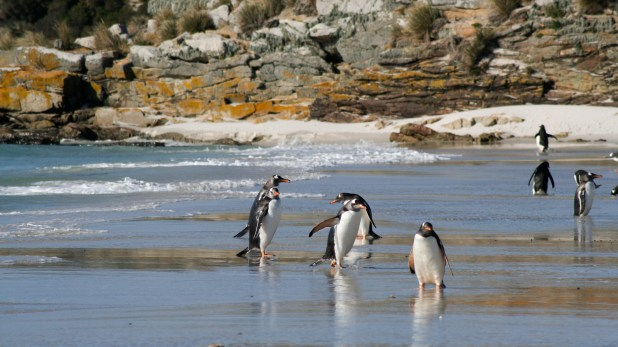 Group of penguins on a beach.