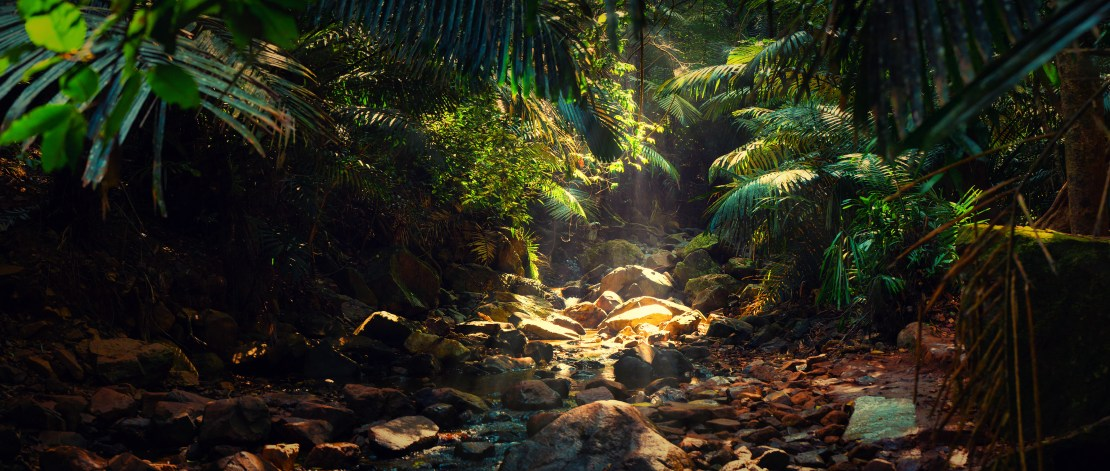 Panorama of a shallow mountain stream in the Indian jungle.