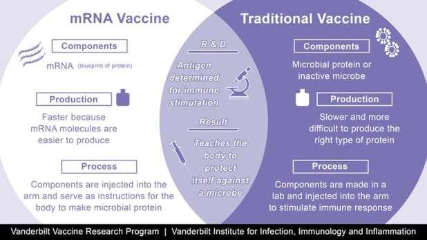 وصف الاختلافات بين لقاحات mRNA واللقاحات التقليدية