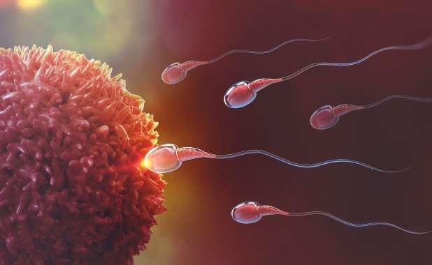 رسم بياني يظهر الحيوانات المنوية تسبح نحو خلية بويضة.