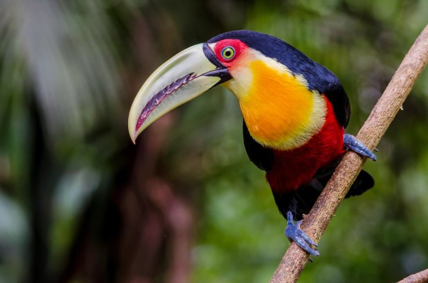 A colourful bird sits on branch