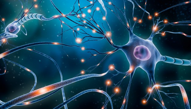 An artist's impression of neurons in the brain