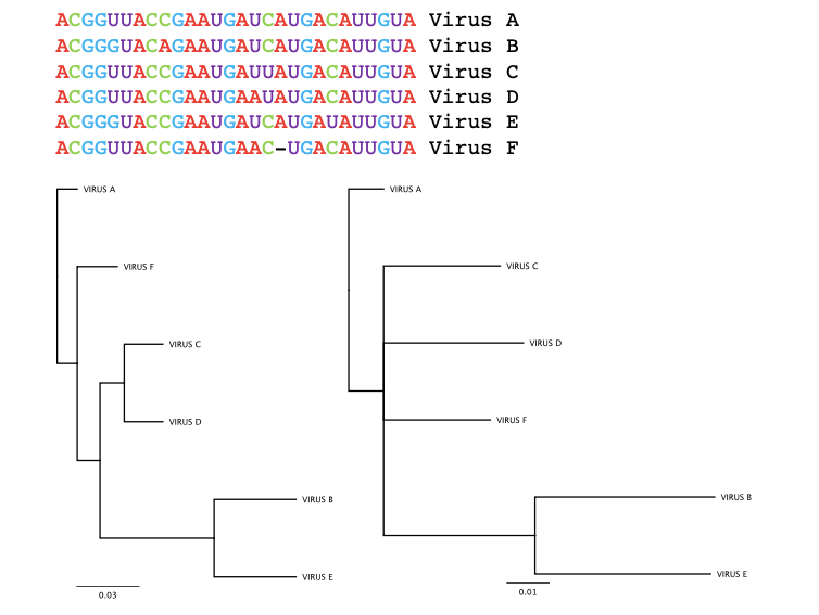 Example of two different phylogenetic trees constructed for the same genetic sequences