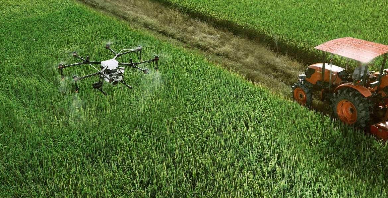 Don volando sobre un campo de cultivo