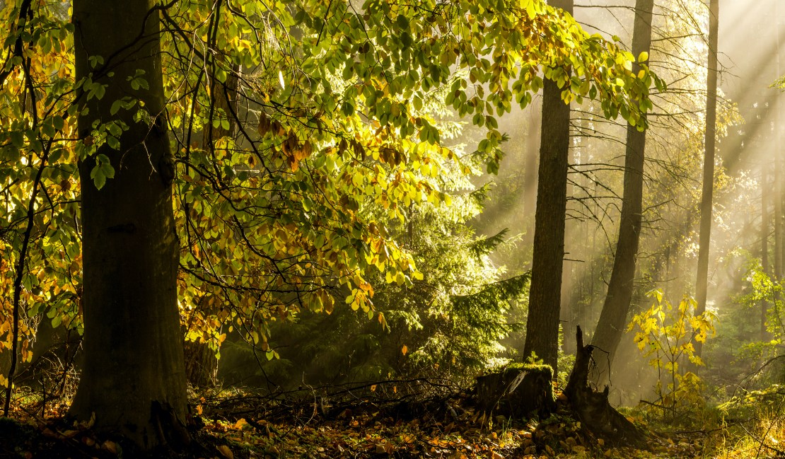 A natural forest, with sunlight streaming through the leaves.