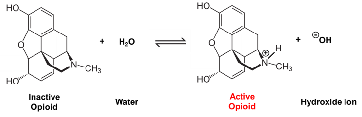 Morphine reaction with water to generate active opioid.