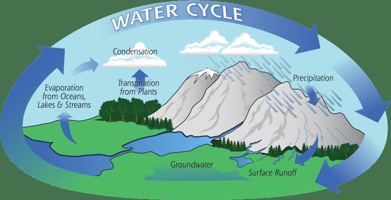 La ilustración muestra cómo el agua cicula a través de la precipitación, la escorrentía, las aguas subterráneas, las plantas, la evaporación y la condensación para volver a caer.