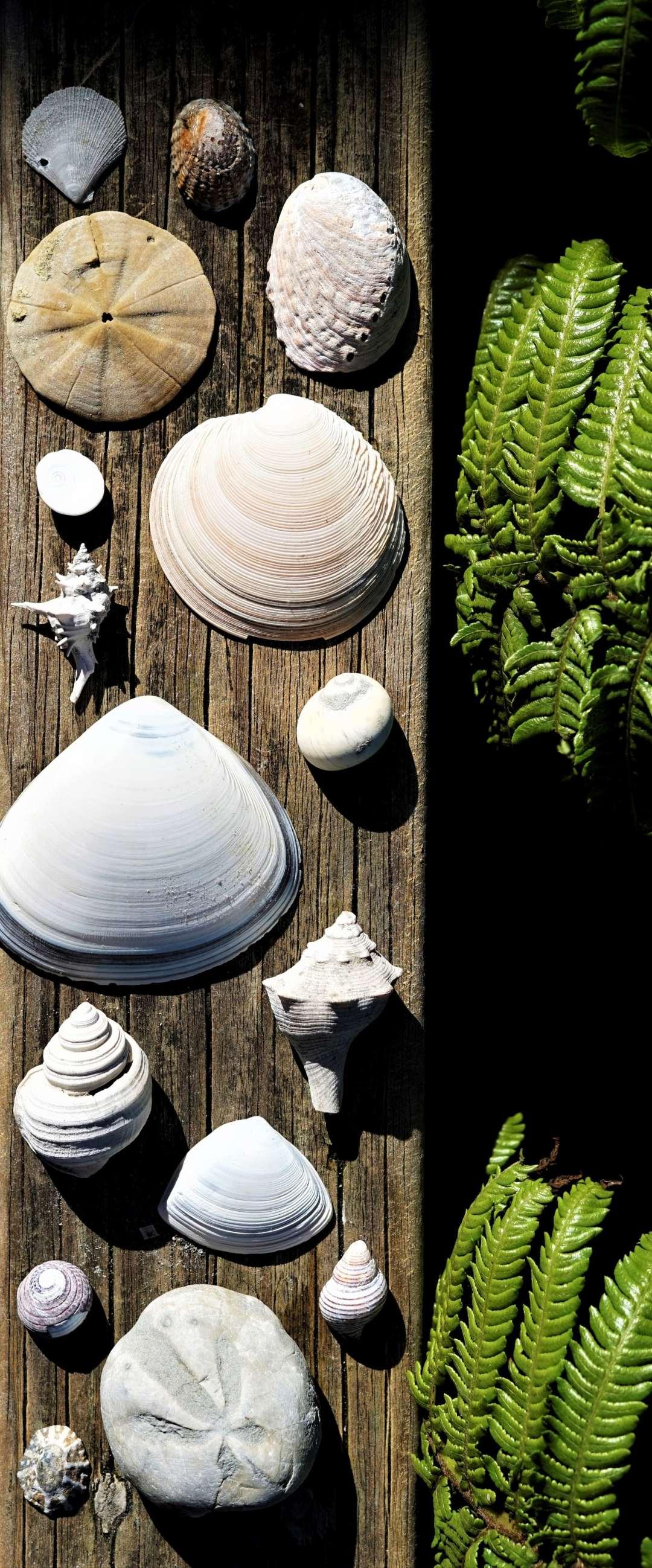 Diffedrent types of marine organisms found in New Zealand.