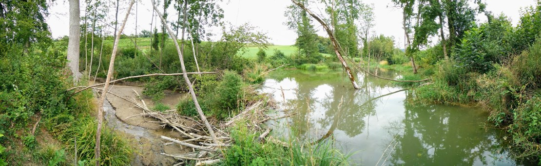 Beaver dam of branches with deep river on one side and trickle of water in river bed the other side.