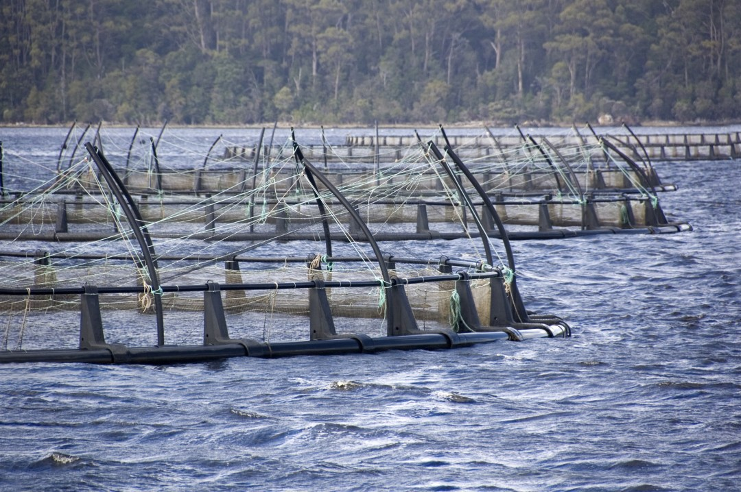 salmon farm infrastructure in water