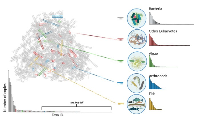 Graphic showing how scientists analyze eDNA to detect different species.