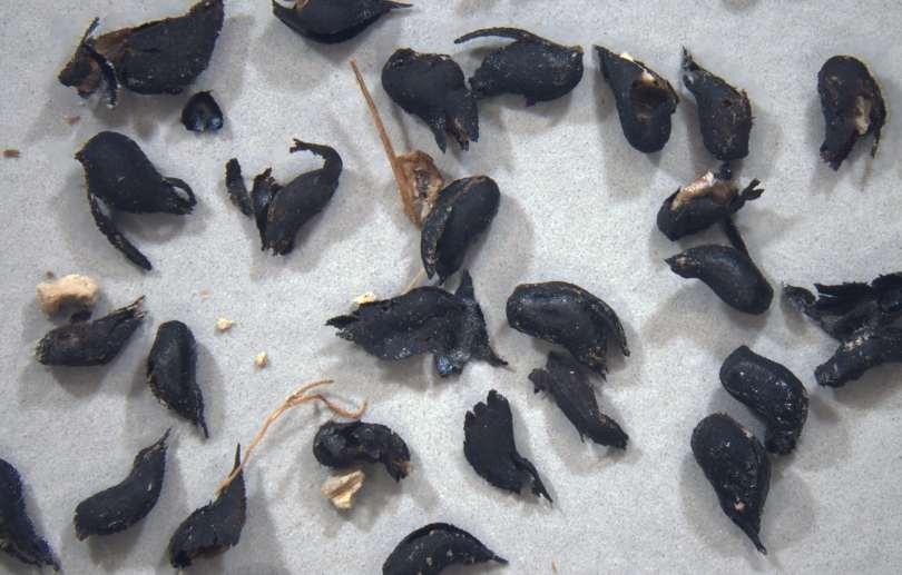 Some dark brown seeds