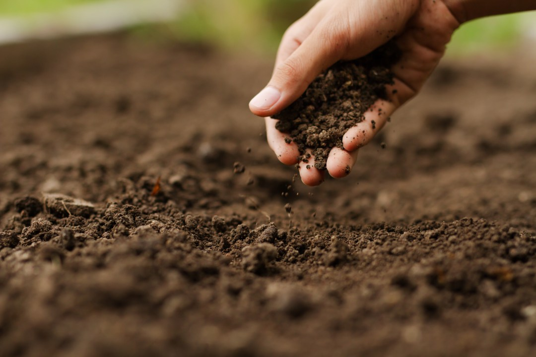 hand presses soil