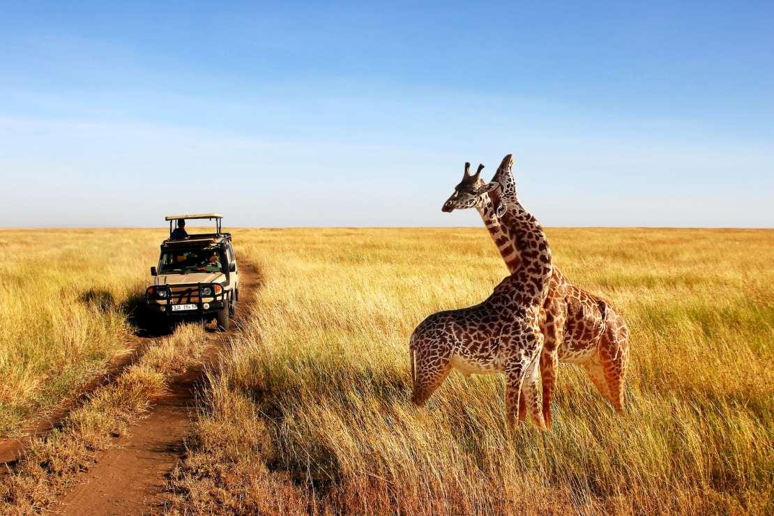A safari in Tanzania