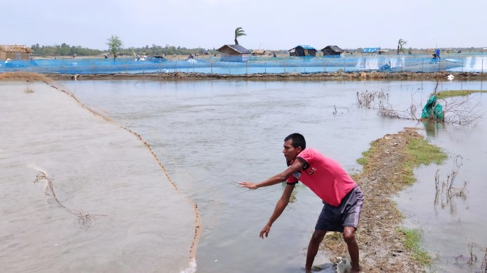 Nearly 8,000 shrimp farmers in Tiapara and its neighbouring 10 to 12 villages have lost their incomes to the cyclone