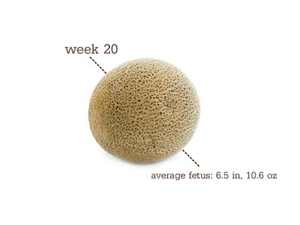 Week 20 Pregnancy Update- Cantaloupe |