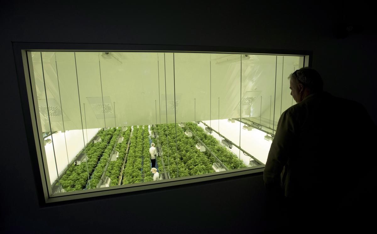 cpt109546273 - Canopy-Acreage deal too risky to be replicated, pot CEOs say